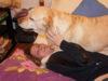 Итальянская собачья жизнь